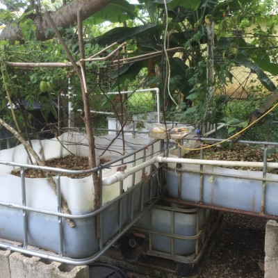 Jorge's three tank aquaponic system